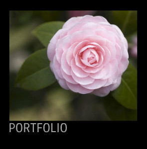 Black Portfolio